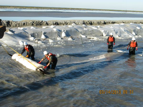 Deploying a geotextile tube in the water along the breakwater