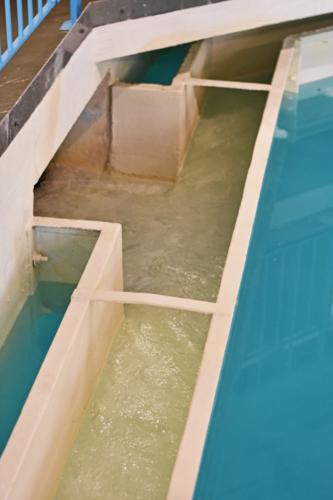 Clarifier effluent